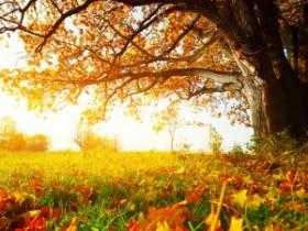 依然生香的秋色